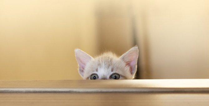 猫が安心したいときによくする仕草3つ