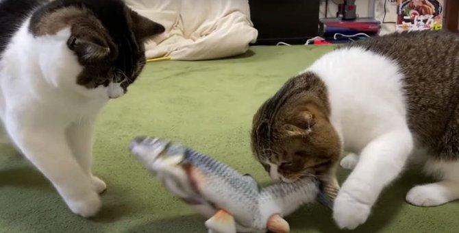 リアルな魚のおもちゃが気に入った猫さんたち!