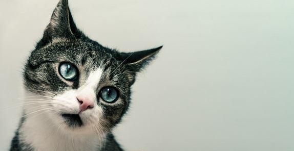 知ってた?猫が嫌いな色3つ