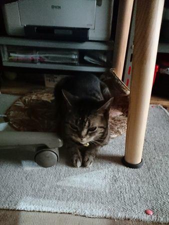 お家の中では要注意!猫を踏んでしまう5つのシチュエーション