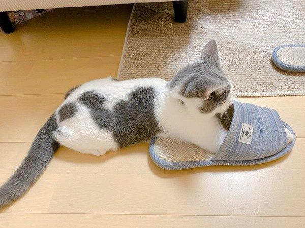 猫がスリッパを好きな理由5つ
