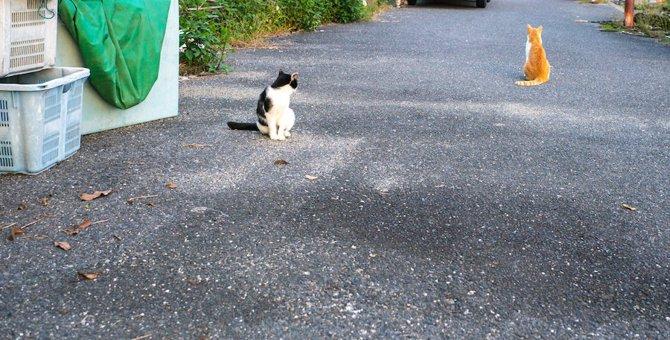 猫を網で捕獲!安全な方法と注意点