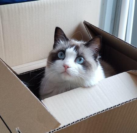 猫が何よりも好きな5つのこと
