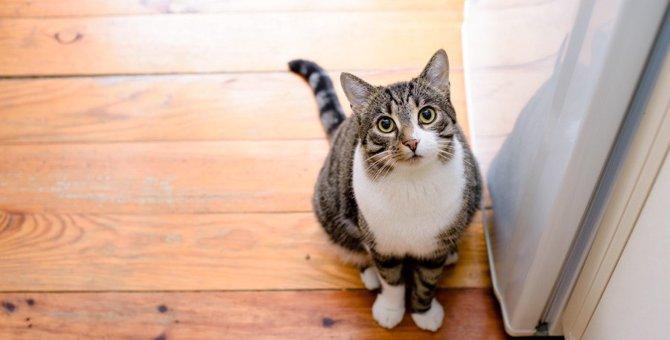 愛猫のお留守番、ケージ派?フリー派?それぞれのメリットデメリットとは?