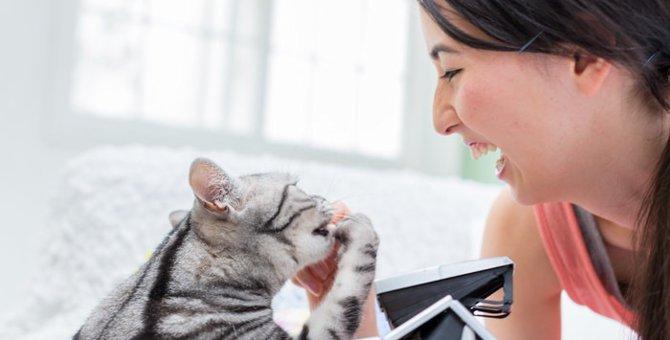猫の「芸」となる行動と本来の意味