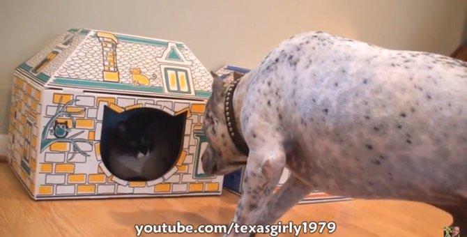 「入ってこにゃいで!」猫ちゃん専用ハウス!ワンちゃんお断り