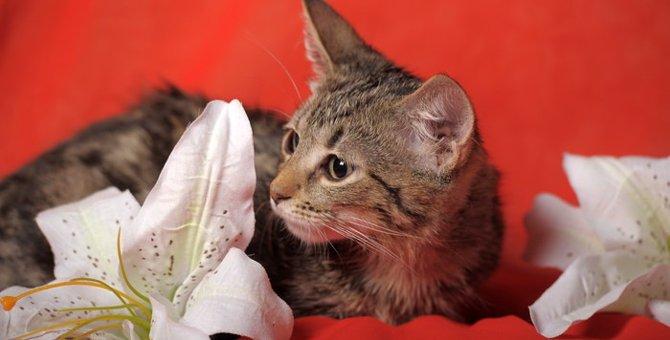 猫にとってユリが危険な理由とその対処法