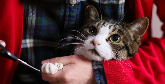 猫の爪切りおすすめな商品や選び方