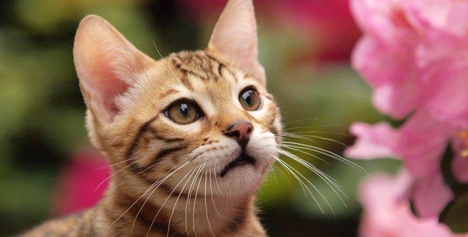 猫が『フレーメン反応』を起こしやすいアイテム5選
