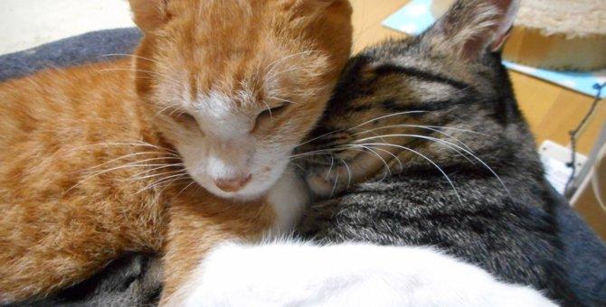先住猫とも仲良しに♡一人ぼっちで彷徨っていた子猫を保護
