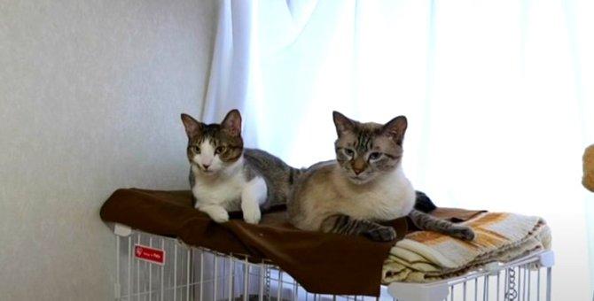 『はやく帰ってきて〜…』お留守番を頑張る猫ちゃんたちを覗き見!