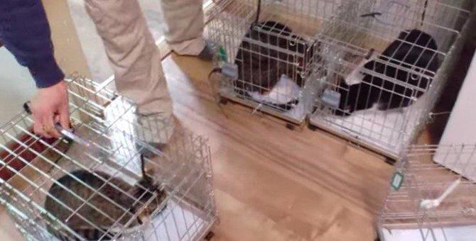 2匹の猫が20匹以上に…失業した飼い主と猫の行く末は?No.5