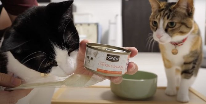 猫缶が美味しすぎて大粒の涙を流すにゃんこ♡