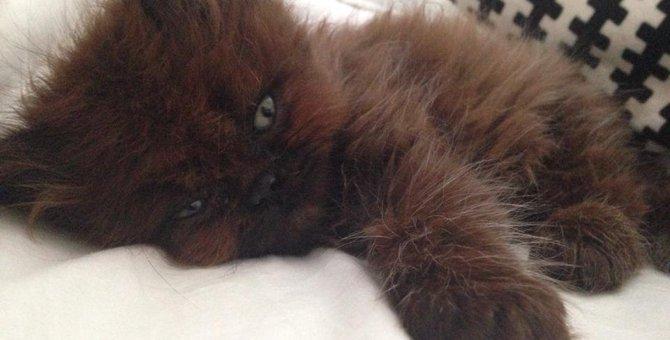 誰もが諦めた命…奇跡の生還を遂げた子猫のビフォーアフターに衝撃!