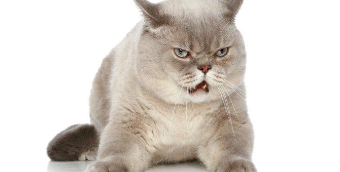 猫が不服を唱えているときに見せる5つのサイン