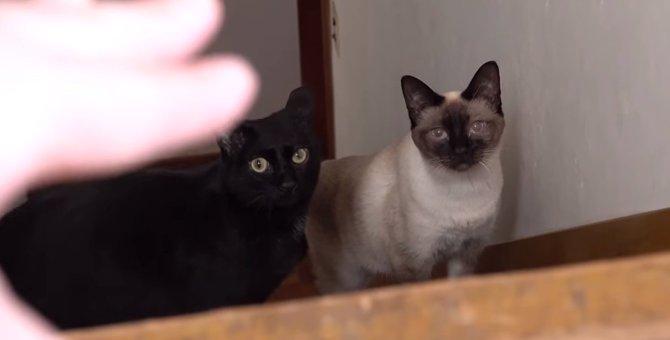 まさかのスル―…兄弟猫でもこんなに性格が違うなんて!