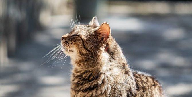 猫に『白髪』が生えてしまう原因5つ