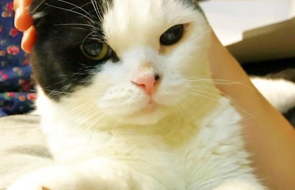 気まぐれなだけじゃない!ココが可愛い猫の魅力7選