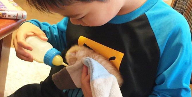 ゴミ袋に棄てられた子猫デンとの運命的な出会い