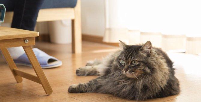 猫の飼い主が絶対しちゃダメな『室内の危険行為』3選!猫がいる部屋で注意すべきことは?