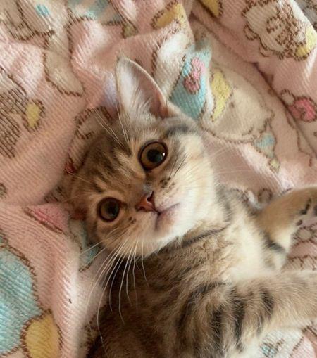 猫との絆を強くするための方法3つ!愛猫との信頼関係築けていますか?