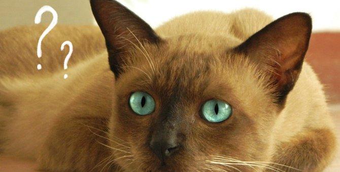 ワクチンで癌!?猫のワクチン肉腫とは?