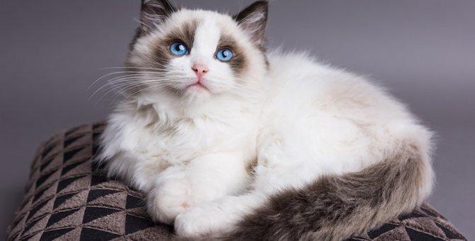 猫の性格は何で決まるの?種類別の性格の特徴