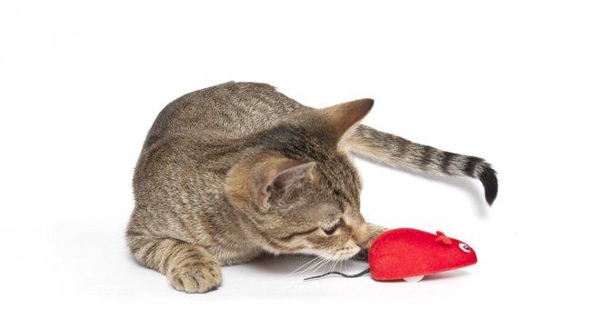 猫とラジコンおもちゃを使って遊ぶ際の選び方や注意点、おすすめ商品3点まで