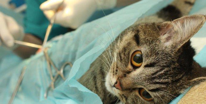 猫の去勢が必要な理由と基礎知識