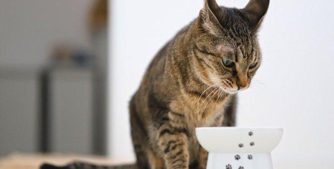 猫が『食事をしながらイカ耳』になる心理4選