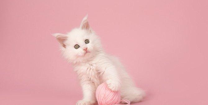 猫のかわいいパーツ6選