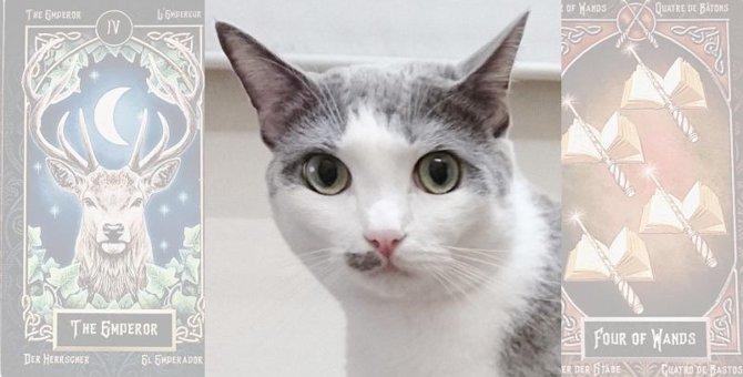【Laylaの個別リーディング】☆大和くん☆カードから読み解く飼い主さんへのメッセージ