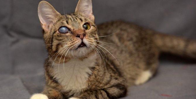猫の白内障ってどんな病気?治療法や見分け方を解説