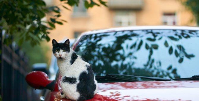 猫バンバンステッカーを貼る理由と入手方法