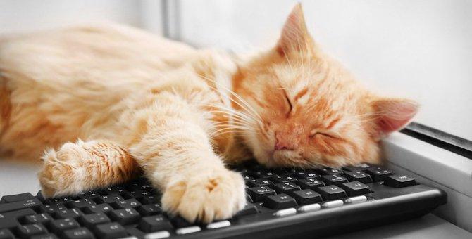 猫がパソコンの上に座る6つの理由