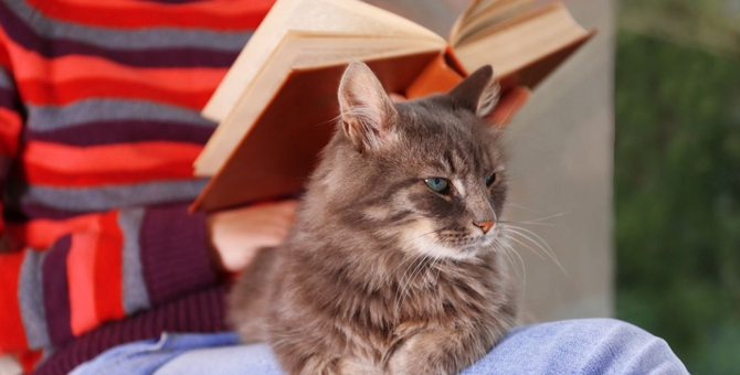 妊婦は猫を飼ってはダメ?注意すべき病気と正しい付き合い方