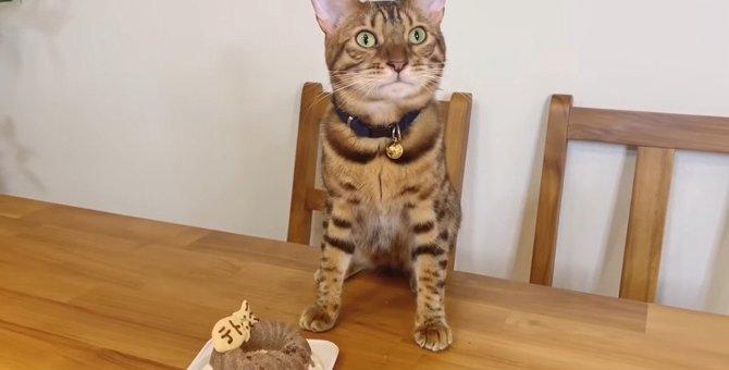 みんなで食べたい♪お誕生日ケーキを分けてあげる優しい猫さん!