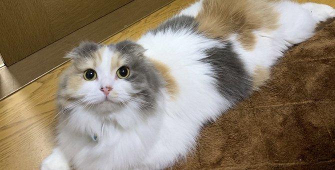猫に必要な『パーソナルスペース』とは?良い関係には距離感が大切だった!