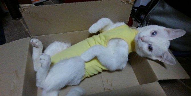 道路で保護した子猫~涙とくしゃみとの戦い、猫エイズの結果