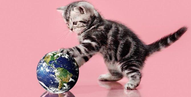 英語圏(アメリカ・イギリス・オーストラリア)で人気な猫の名前ベスト3!