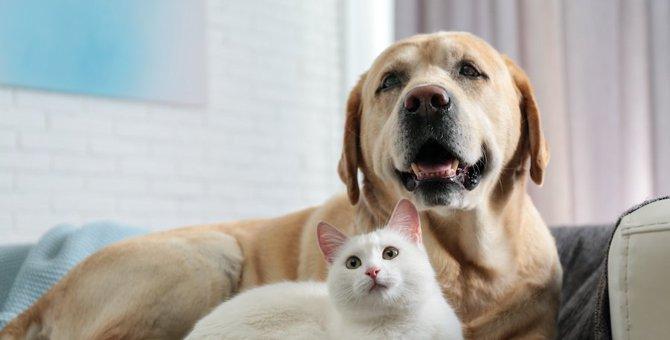犬みたいな猫ってどんな性格?犬みたいな猫の特徴とその猫種をご紹介