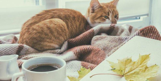 吉祥寺の猫カフェで絶対に行きたいおすすめ人気店2選!