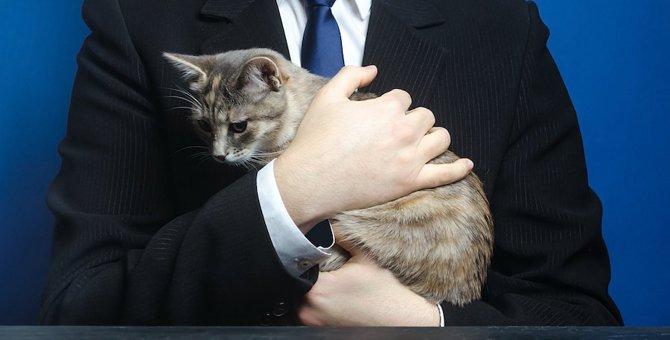 猫のいる会社で働きたい!一緒に働く方法をご紹介