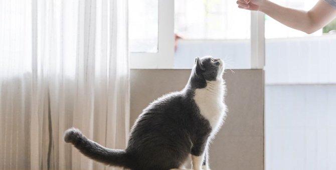 猫が夢中になる『おやつ』3選!大人気のウェットタイプのおやつに心を奪われる理由とは?