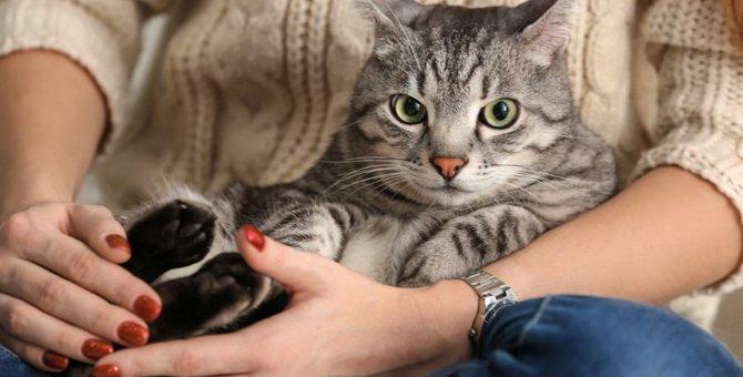 猫の飼い主に『適してない人』の特徴3つ