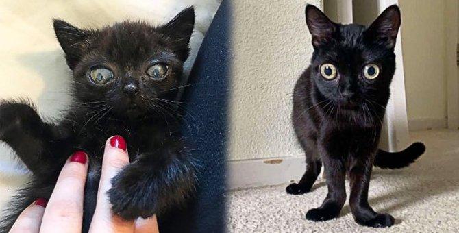 エイリアンキャットと呼ばれる子猫…目を奪われる可愛い姿に悶絶♡