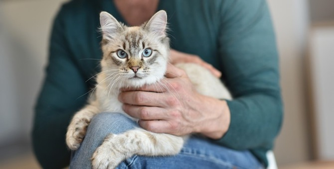 猫の足には不思議がいっぱい!肉球からふみふみまで徹底検証!