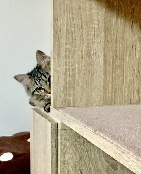 猫も照れることがある?5つの仕草や行動