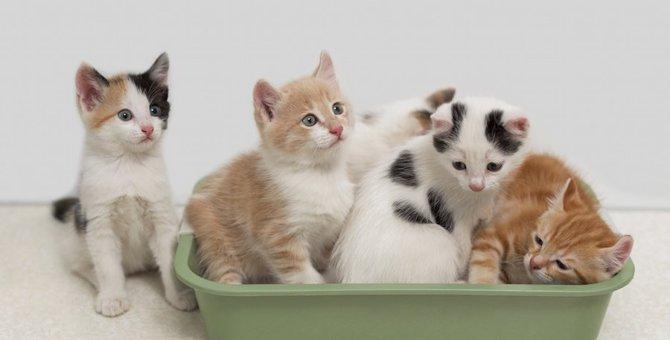猫の多頭飼いをはじめたら『システムトイレ』がおすすめ