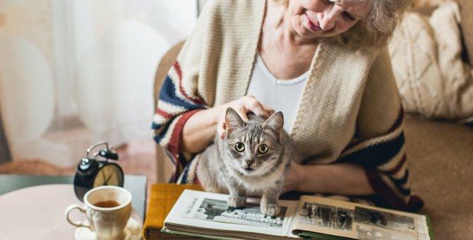 猫がかまって欲しい時にする6つの仕草
